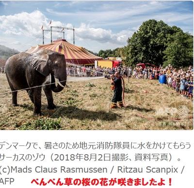 デンマークのサーカスの象
