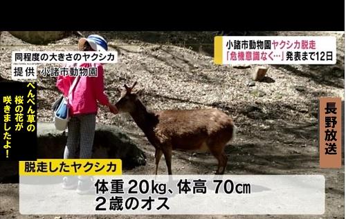 ヤクシカが長野県・小諸市動物園から脱走して帰ってこない