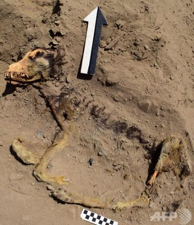 1000年以上前の犬の死骸
