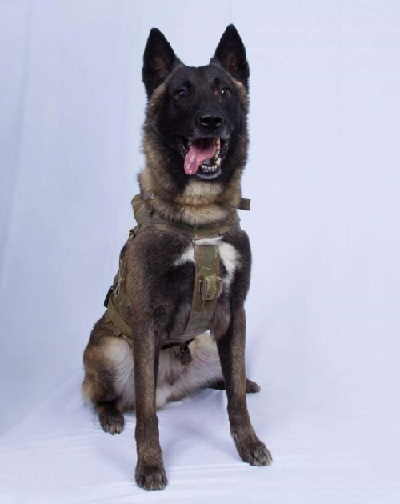 IS作戦で活躍した軍用犬