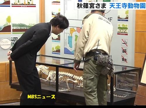 秋篠宮さま天王寺動物園視察