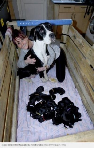 自然分娩で21匹の赤ちゃんを出産した犬