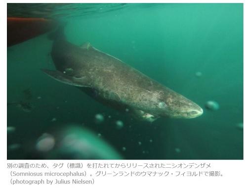 392歳のサメ