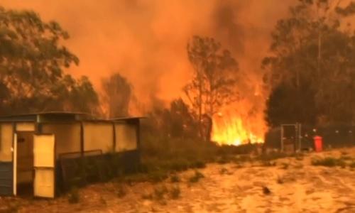 オーストラリア森林火災、焼け跡に新しい命5