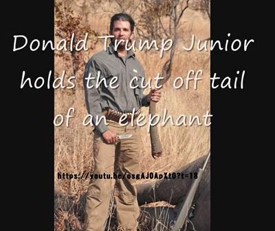 トランプ大統領ジュニア象を意味なく殺す