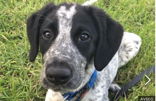 射殺された「グリズ」は生後10カ月の見習い探知犬だった