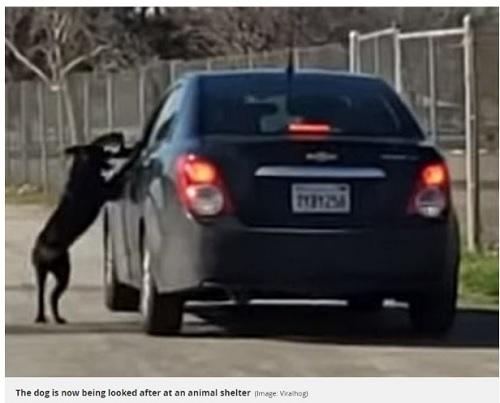飼い主と思われる男性の車を必死に追いかける犬