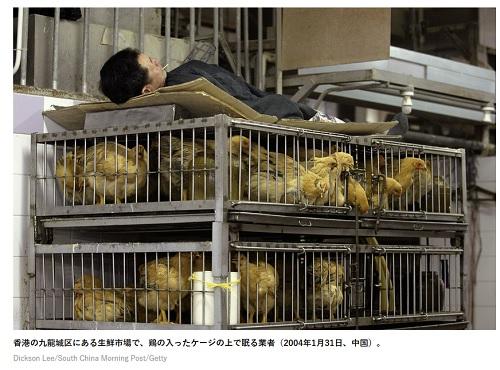 鶏の入ったケージの上で眠る業者(2004年1月31日、中国