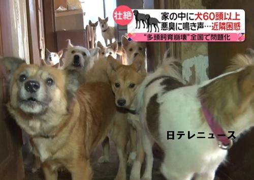 60頭超の多頭飼犬