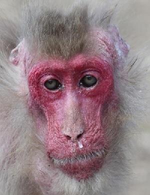 猿花粉症鼻水