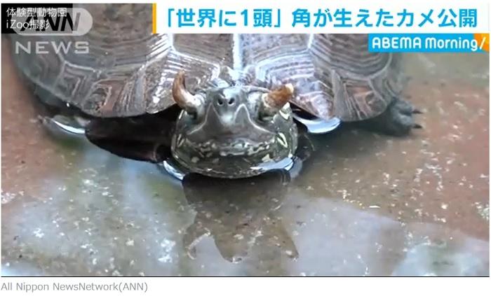 角が生えた亀