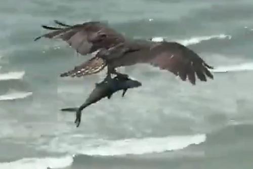 鳥が魚を釣り上げた