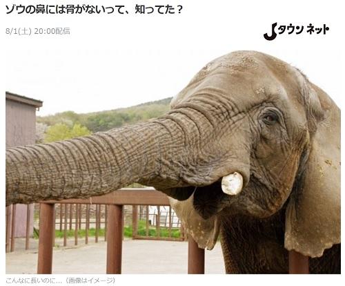 ゾウの鼻には骨がない