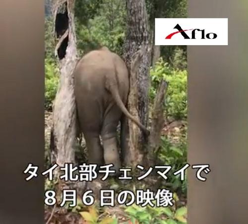 小象のお尻が木に挟まった
