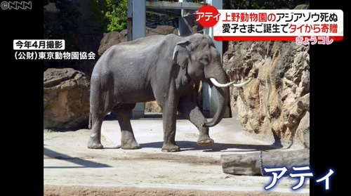 愛子さま誕生で記念に贈られたゾウが若くして死ぬ