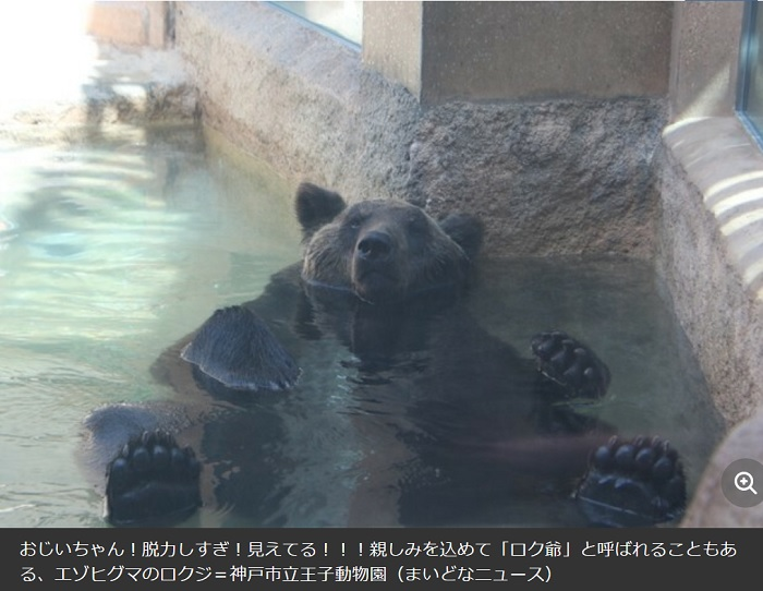 脱力するクマ