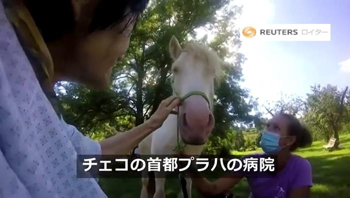 馬セラピー