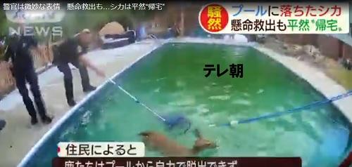 シカをプールから救助しっようとする警察官