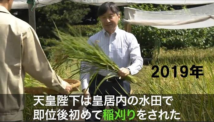 2019年稲刈りをする天皇