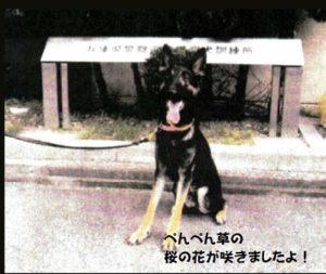 逃走した警察犬無事発見