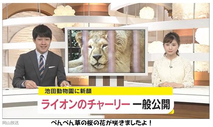 池田厚子さんの池田動物園に新しいライオン
