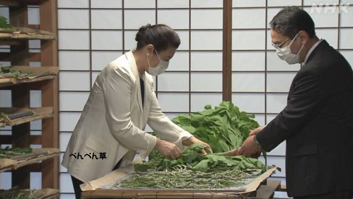 """皇后雅子さま""""御給桑"""" 蚕に桑の葉与える伝統行事"""